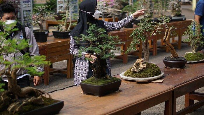 Jemur Bonsai di Halaman Kantor Desa, Cara Pencinta di Warungasem Batang Kenalkan Bonsai ke Warga