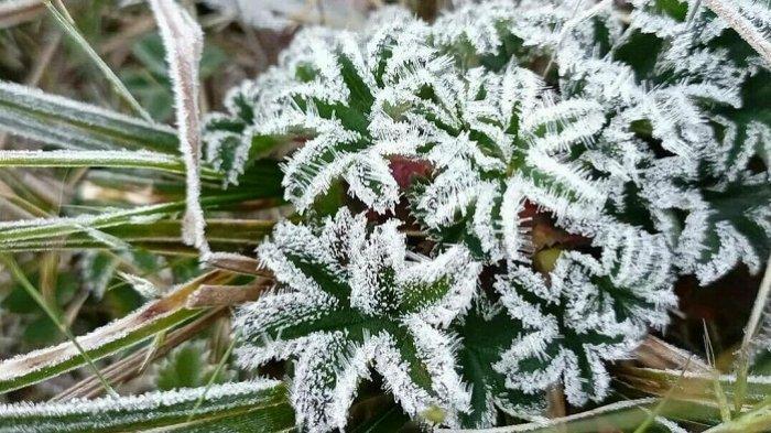 Bunga Es Muncul di Gunung Lawu Karanganyar, Suhu di Puncak Diperkirakan Capai 2 Derajat Celcius