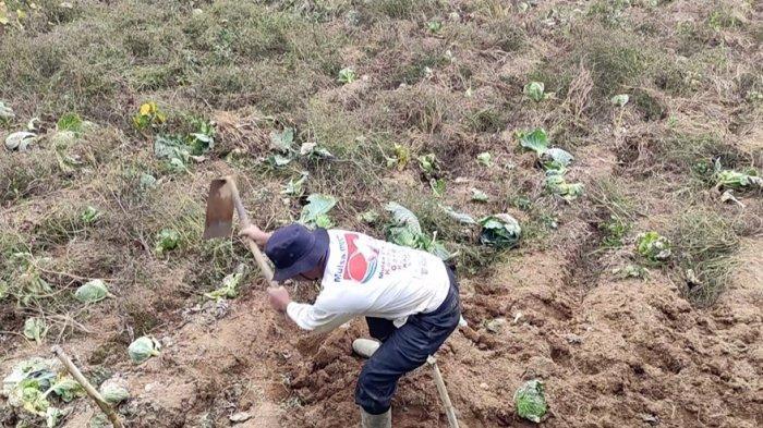 Kisah Sukses Petani di Kejajar Wonosobo, Berangkat Haji dan Kuliahkan Anak Menjadi Dokter