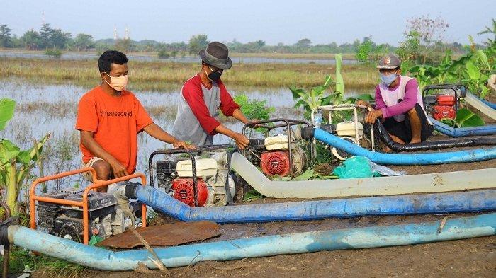 Dapat Bantuan 20 Pompa, Petani di Setrokalangan Kudus Mulai Keringkan Sawah dari Banjir