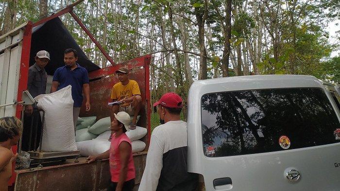 Peternak Ayam di Karanganyar Mulai Terima Bantuan Jagung dari Presiden, Diberi Harga Rp 4.500/Kg