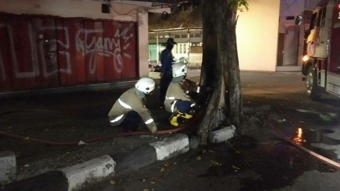 Pohon Misterius di Jalan MT Haryono Semarang Tiba-tiba Terbakar, Damkar Tidak Bisa Pastikan Asal Api