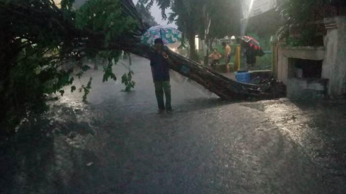 Usai Hujan Lebat, Banjir dan Pohon Tumbang Terjadi di Sejumlah Wilayah di Kota Semarang