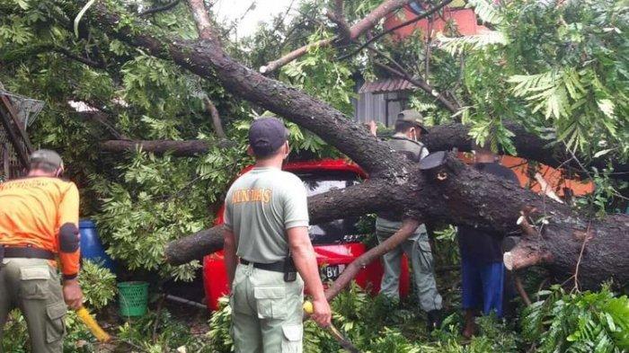 3 Pengendara Motor Tertimpa Pohon saat Melintas di Jalan Wonosari-Yogyakarta, Begini Kondisinya