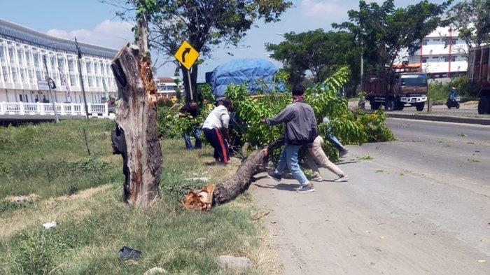 Pemotor Ini Minta Ganti Rugi Seusai Tertimpa Pohon Akasia, Pemkot Semarang: Maaf Tidak Bisa