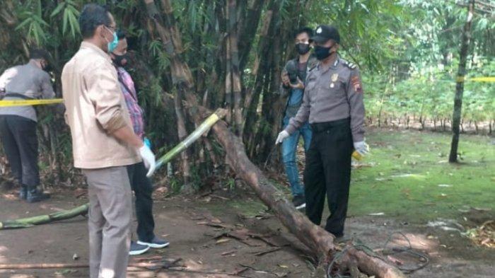 Warga Brecong Kebumen Tewas Tertimpa Pohon Tumbang, Polisi Temukan Seutas Tali Plastik di Pohon