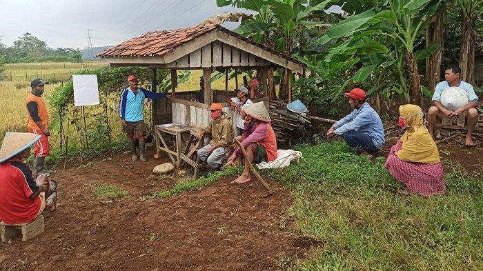 Digelontor Dana Rp 1 Miliar, Petani di Cilongok Banyumas Bikin Kolam Ikan di Tengah Sawah