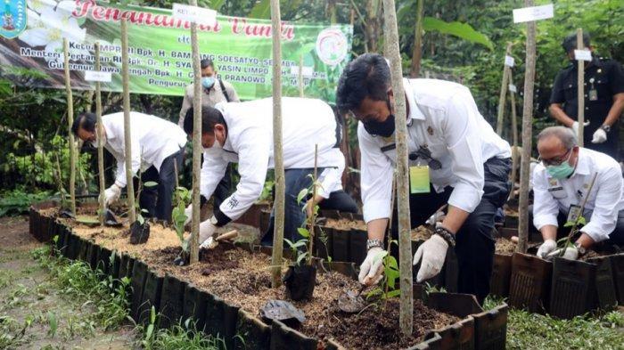 Salatiga Kota Vanili, Yuliyanto: Kami Sudah Bentuk Asosiasi Petani, Kelola 5.900 Bibit