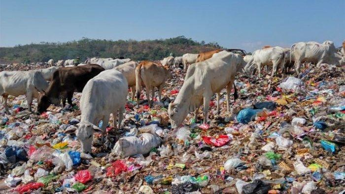 Selama PPKM, Produksi Sampah di Kota Semarang Turun 100 Ton Per Hari