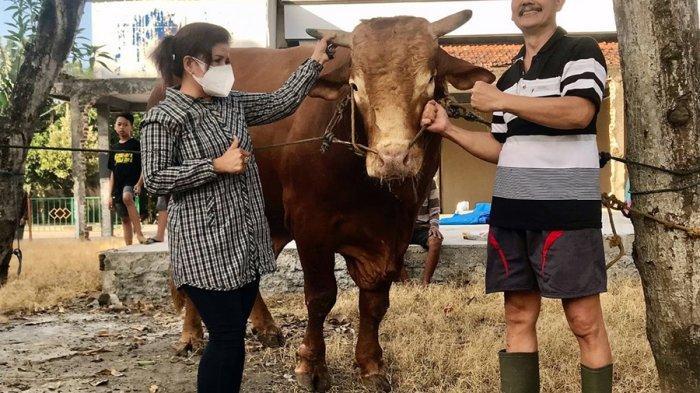 Sapi Limousin Terberat di Pati Ini Terjual Rp 100 Juta, Anita Sebut Boy Limos Selalu Menangi Kontes