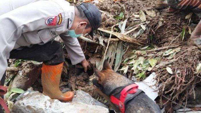 Polresta Banyumas Terjunkan Anjing Pelacak Bantu Pencarian Korban Longsor di Banjarpanepen Banyumas
