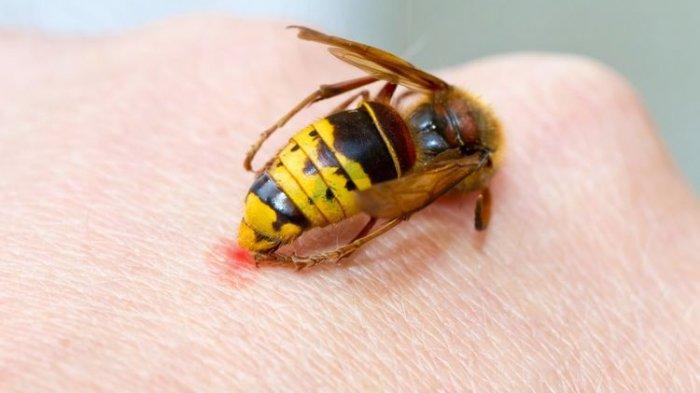 Teror Lebah Kembali Terjadi, Kakek di Temanggung Tewas Setelah Disengat Lebah