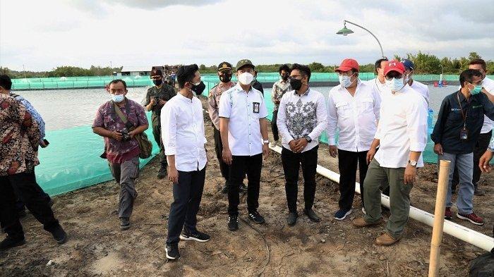 Stafsus Wakil Presiden Resmikan Tambak Udang Vename di Cilacap, Berharap Dongkrak Ekonomi Warga