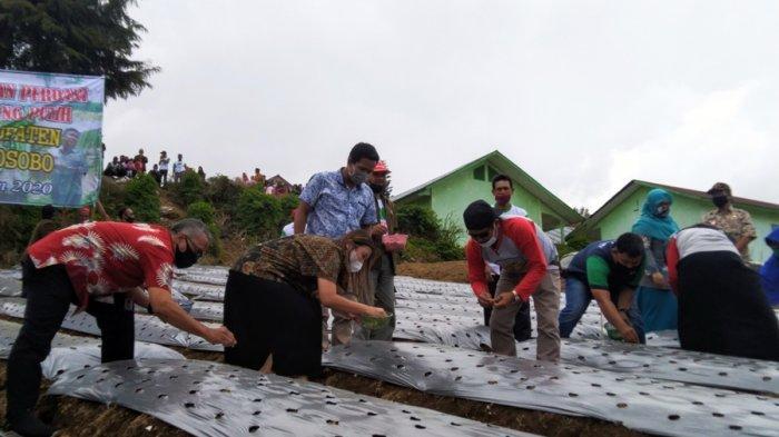 Disebut Karena Pandemi, Lahan di Temanggung yang Ditanami Bawang Putih Cuma 225 Hektare