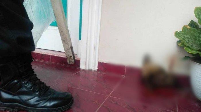 Kasi Penkum Kejati Riau Diteror, Ada Potongan Kepala Anjing di Teras Rumah
