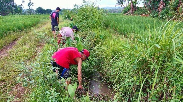 Uang Misterius Capai Puluhan Juta Rupiah di Batang, Petani: Bercampur Lumpur di Irigasi Persawahan
