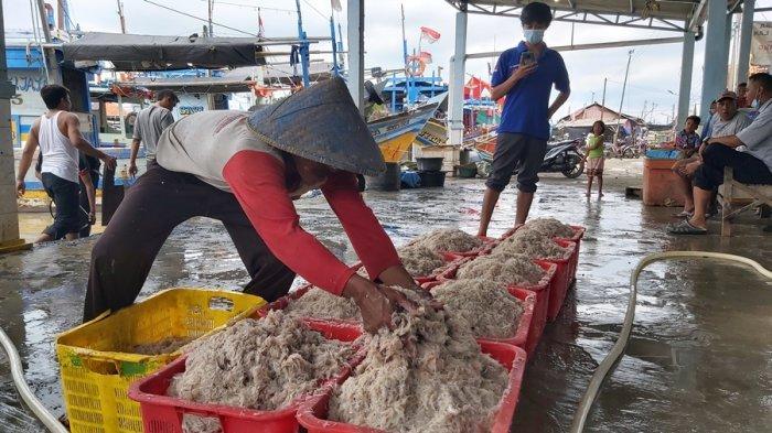 Berkah Nelayan Saat Musim Baratan, Tangkapan Udang Rebon Melimpah di Tegal