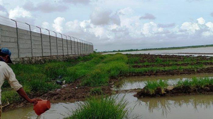Petani Cimohong Brebes Keluhkan Puluhan Hektar Sawah Terendam Banjir, Saluran Tertutup Pabrik Garmen