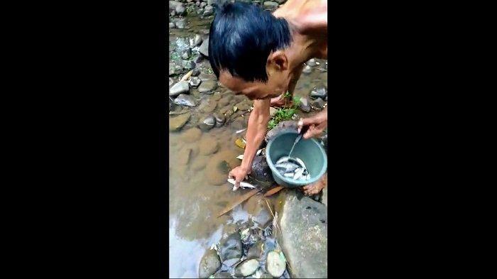 2 Hari Warga Soropadan Temanggung Temukan Ikan di Sungai Elo Mati, Diduga Tercemar Limbah Pabrik