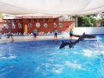 batang-dolphin-center-3.jpg