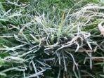 embun-es-menutupi-rumput-liar-di-sekitar-candi-arjuna-dieng-senin-1052021-pagi.jpg