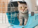 kucing-takut-mentimun.jpg