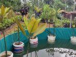 mangrove-air-tawar-wonosobo.jpg