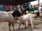 pasar-hewan-purwonegoro-banjarnegara.jpg