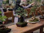 perkumpulan-penggemar-bonsai-indonesia-batang-di-warungasem-jemur-bonsai.jpg