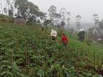 petani-asal-panggungan-banjarnegara-sugiat-sedekahkan-sayuran-ke-panti-asuhan-dan-pondok-pesantren.jpg