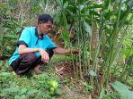 petani-desa-prendengan-banjarnegara-memperlihatkan-rumpun-tanaman-kapulaga-di-lahan.jpg