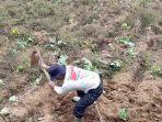 petani-kentang-kejajar-wonosobo.jpg