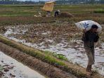 petani-memanen-padi-di-daerah-desa-pekuncen-kecamatan-jatilawang-kabupaten-banyumas-juli-2020.jpg