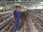 peternak-ayam-petelur-di-desa-winong-kecamatan-bawang-banjarnegara.jpg