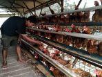 peternakan-ayam-di-desa-lawu-kabupaten-kudus-selasa-2192021.jpg