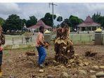 petugas-membersihkan-sisa-penebangan-pohon-beringin-meranggas-di-alun-alun-banjarnegara.jpg