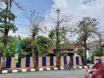 pohon-pule-di-pinggir-jalan-gajah-mada-kota-semarang-mulai-mengering-disiram-solar.jpg