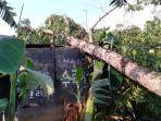 pohon-tumbang-adipala-cilacap.jpg