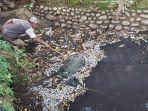 warga-desa-pacar-kabupaten-pekalongan-membersihkan-ikan-mati-di-sungai-pencongan.jpg