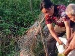 warga-menangkap-ular-piton-di-kampung-sawah-tugurejo-kota-semarang-kamis-1132021.jpg