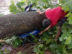 warga-mengevakuasi-motor-yang-ditumpangi-sutarto-50-petani-yang-tewas-tertimpa-pohon.jpg