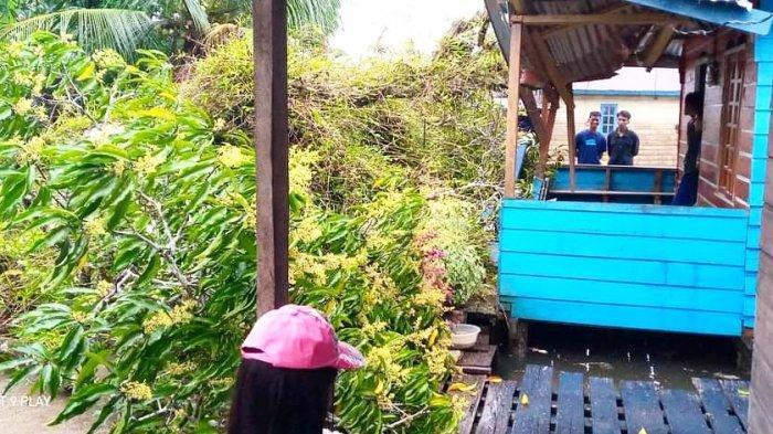 Pohon tumbang di wilayah Desa Duara, Kecamatan Lingga Utara, Kabupaten Lingga, Jumat (1/1/2021)