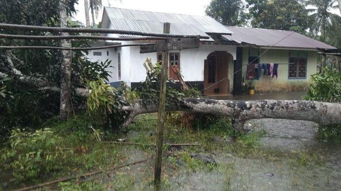 Pohon tumbang di Kampung Suak Rasau, Desa Sungai Buluh, Kecamatan Singkep Barat, Kabupaten Lingga, Jumat (1/1/2020)