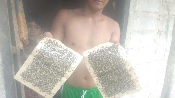 Ribuan Lalat Serbu Rumah Warga di Galang Batam, Uba Minta Perhatian Serius Pemerintah