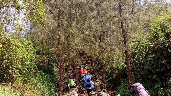Cerita Pendaki Soal Hutan Alas Lali Jiwo di Gunung Arjuno, Sering Menyesatkan hingga Mitos Larangan