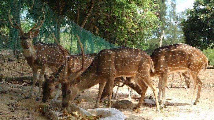 Taman Rusa Siapkan Protokol Kesehatan untuk Cegah Covid-19 di Lokasi Wisata