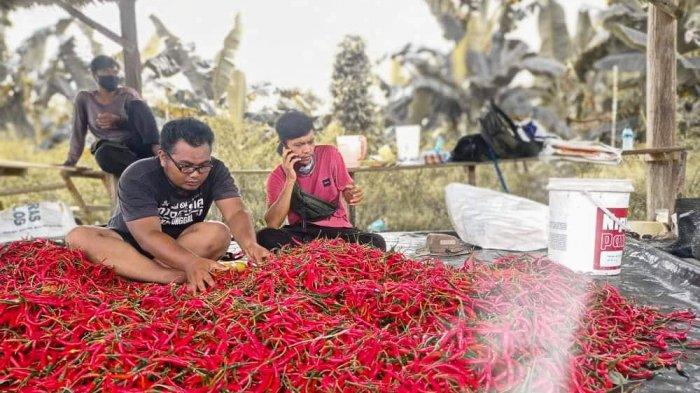 Tedi Triyanto dan Didin Maulana, seusai panen cabai di kebun milik DPKP Lingga bersama pihak lain, di Desa Sungai Raya, Kecamatan Singkep Barat, Kabupaten Lingga, Kepulauan Riau, baru-baru ini