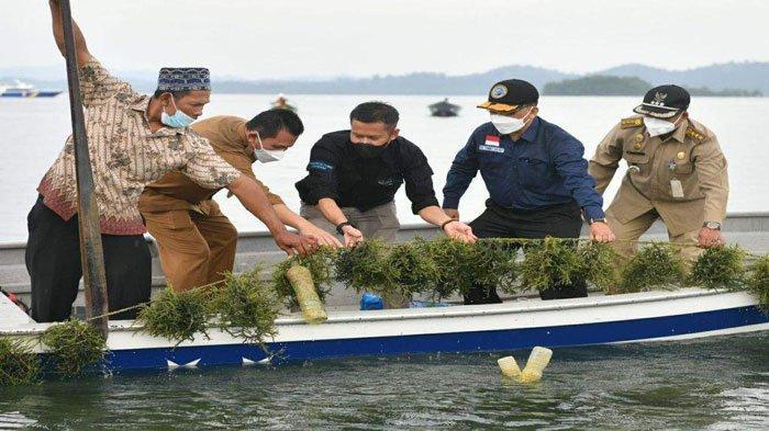 Gubernur Kepri Dorong Pengembangan Budidaya Rumput Laut, Ikut Panen di Karimun