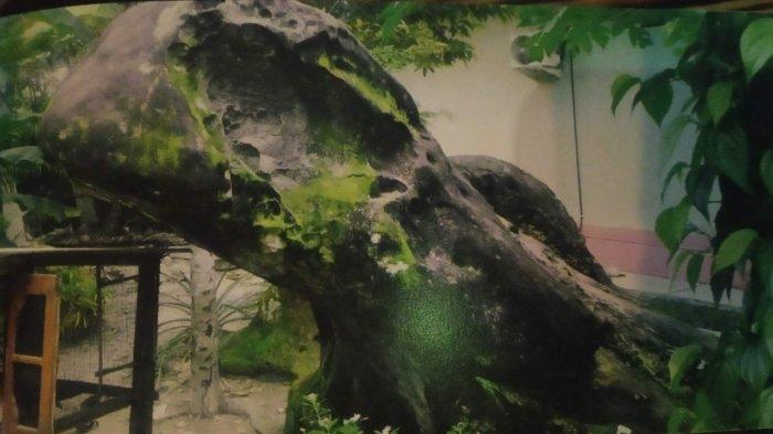 Bentuk batu yang menyerupai kucing di Tanjungpinang