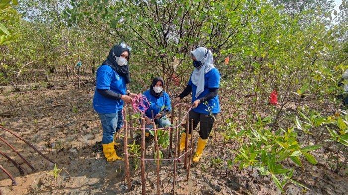 PT Timah Tanam 5000 Batang Mangrove di Pantai Batu Kucing Karimun, Ajak Warga Ikut serta